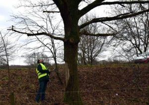 visuelle Baumkontrolle nach Verkehrsunfall